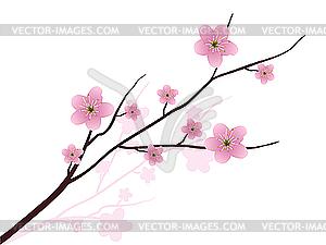 Blühende Kirsche - Vektor Clip Art