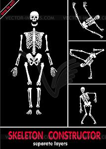 Skelette - Vektor-Skizze