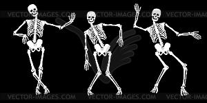 Weiße getrunkene Skelette - Stock Vektorgrafik