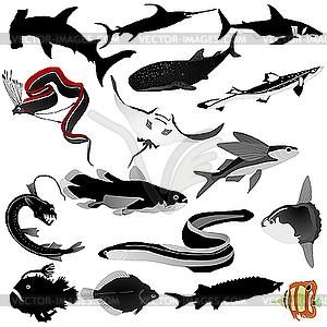 Sammlung von Fischen - Vektorgrafik