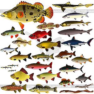 Sammlung von Fischen - Vektor-Illustration