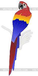 Papagei - Vektor-Abbildung