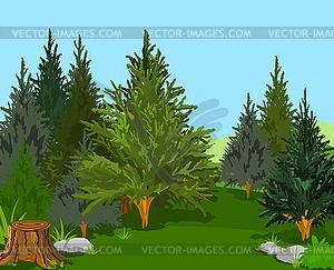 Forest Landscape - vector clip art