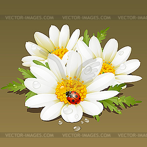 Kamille floralen Ornament. Blumen frisch Hintergrund. - Vektor-Clipart / Vektorgrafik