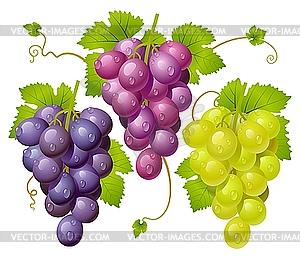 Drei Weintrauben - Vector-Design