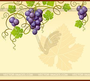 Hintergrund mit Trauben - Vektorgrafik