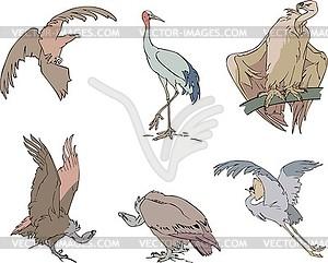 Vögel - Adler, Storch, Greif und Kranich - Vector-Clipart