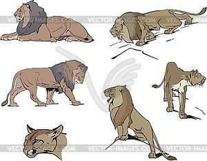 Set von Löwen - Vektor-Clipart EPS