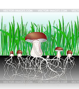 Pilze - Pilzmyzel und Sporen - Clipart