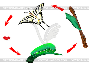 Butterfly life cycle. Metamorphosis - vector clipart