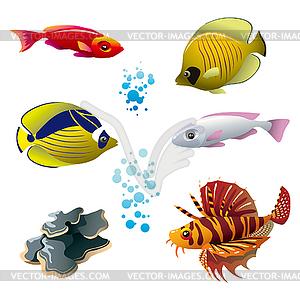Тропические рыбки - рисунок в векторе: http://vector-images.com/clipart/clp516978/?lang=rus