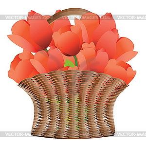Korb der Tulpen - farbige Vektorgrafik