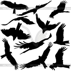 Set schwarz Silhouetten von Raubadler - Vektor-Clipart / Vektorgrafik