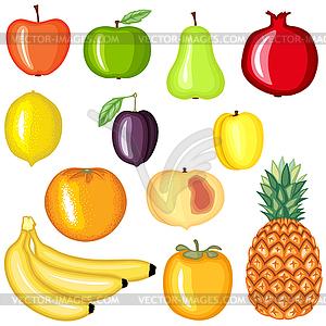Cartoon Fruchtansatz - vektorisierte Abbildung