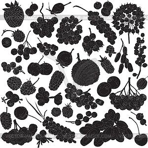 Silhouetten von verschiedenen Beeren - vektorisierte Grafik