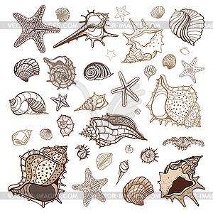 Muscheln Sammlung - vektorisiertes Bild