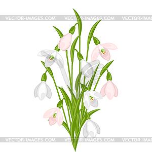 Blumenstrauß Schneeglöckchen - Vector Clip Art