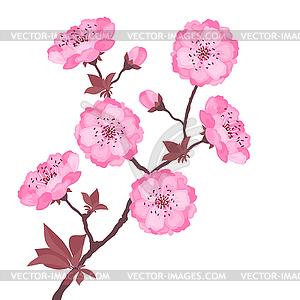 Zweig mit Blüten Kirsche - Vector-Illustration