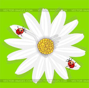 Blume der Kamille und Marienkäfer, auf grünem - Stock-Clipart