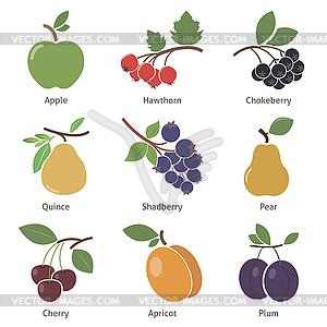 Obst und Beeren - Vektor-Clipart / Vektorgrafik