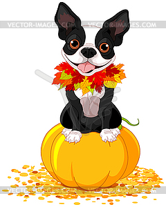 Boston Terrier - Vector-Illustration
