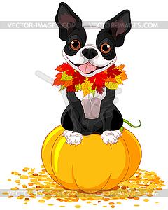 Boston Terrier - Vector-Illustration