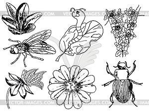 Set von Insekten, Blumen, doodle - Vektor-Clipart / Vektorgrafik