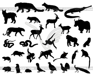 Tiere Asiens - Vektor-Clipart EPS
