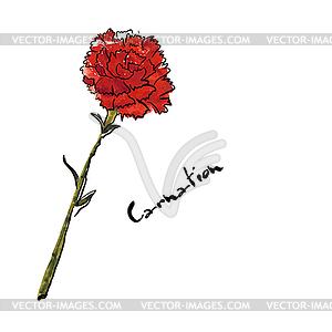 Mit Nelke Blume Π- Vektorgrafik