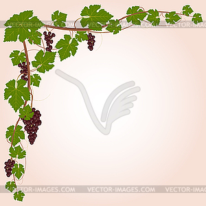 Grape Ecke - Vektorgrafik