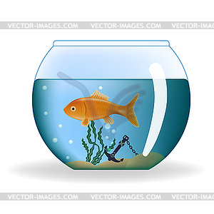 goldfish in runde aquarium vector illustration. Black Bedroom Furniture Sets. Home Design Ideas